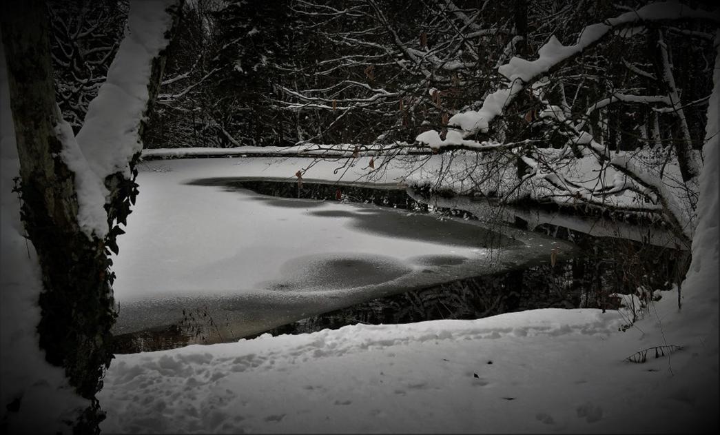 Snow and white roses - Sonia Arekallio | Arenia.ch - Real Estate & Lifestyle in Geneva